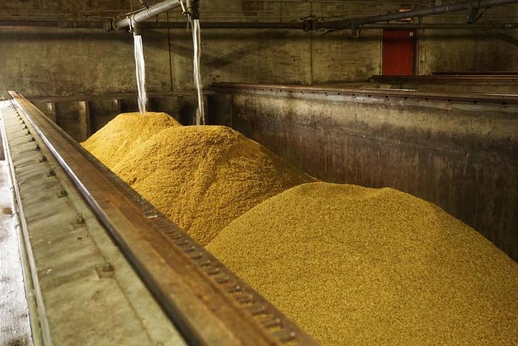 Malting av korn i stor skala.