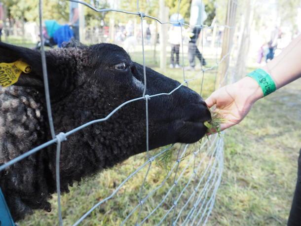 Det er alltid populært å hilse på gårdsdyrene på landbruksmessa.