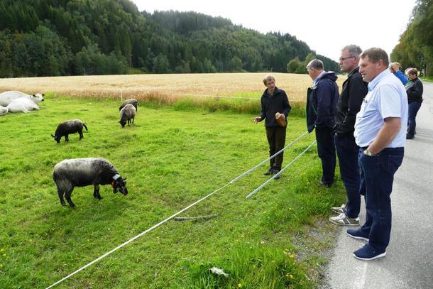 Styret og administrasjonen i Rogaland bondelag får informasjon om dei gamle dyrerasane Arne Stene har på garden sin, Øfsti Søndre i Stjørdal.