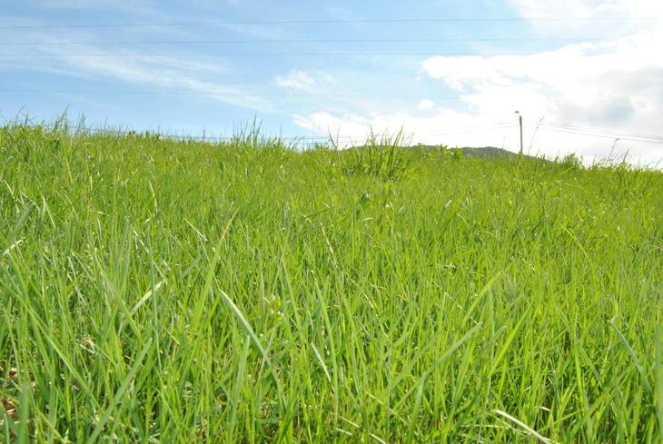 Grønt gras og blå himmel