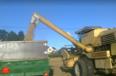 Tresker som fyller henger med korn