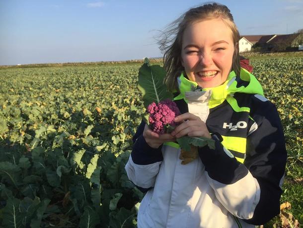 Zara Emilie Eriksen har plukka sitt fyrste, lilla blomkål.