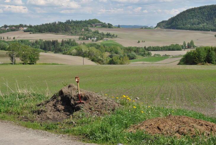Landskap med spirende kornåkre og en spade i forgrunnen