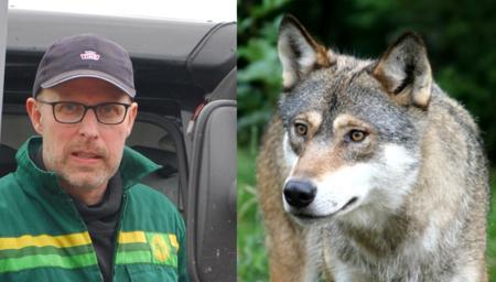 Leder i Hedmark Bondelag, Erling Aas-Eng, tar et oppgjør med feil tallbruk om ulv fra WWF og Naturvernforbundet