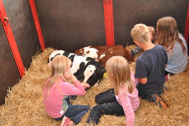 Barn og kalver i halmen og koser seg sammen