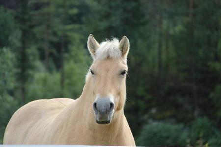 Debatt - Hesten si rolle i samfunnet 3. mai