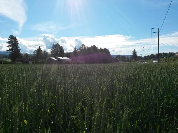 Skrinn åker grunnet tørke i Telemark.