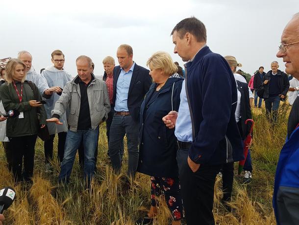 - Så høyt skulle kornet vært, viser bonde Lars Lauten i åkeren som i år kun gir 10 % av normal avling grunnet tørken. Her på befaring med landbruks- og matminister Jon Georg Dale, statsminister Erna Solberg og bondelagsleder Lars Petter Bartnes.