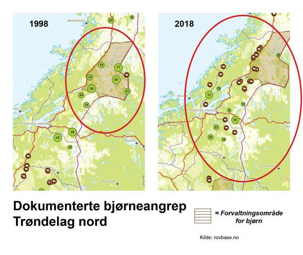 I 1998 skjedde de aller fleste bjørneangrepene på sau og lam i nordlige Trøndelag innenfor forvaltningsområdet for bjørn. 19 år etter var antallet sau som ble sendt på utmarksbeite i de fem kommunene som ligger i eller delvis innenfor bjørnesonen halvert. Mindre sau inne i sonen fører til tap andre steder i Trøndelag, som på Innherred og Fosenhalvøya. Steder som tidligere var trygge for bjørneangrep.
