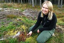Anne Guri Kløvstad fra Mjøsen Skog ser nærmere på grunnlaget for tømmer, granplanta!
