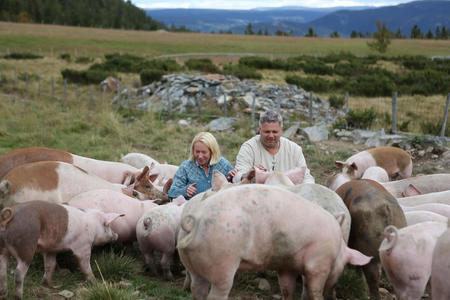 Gunhild og Ole Asmund Sylte blant frilandsgrisene.