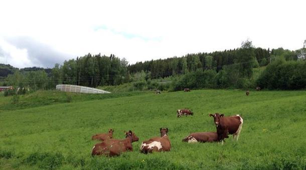 Grovfôrbaserte husdyrproduksjoner inkludert gjødellager kommer høyt på prioriteringslista.