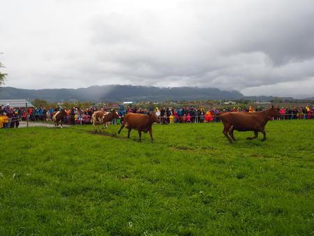 Kyr landbruksareal folketall
