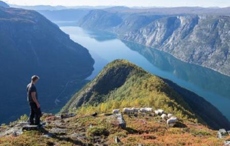 Tilsyn med beitedyr i fjella mellom Lærdal og Årdal