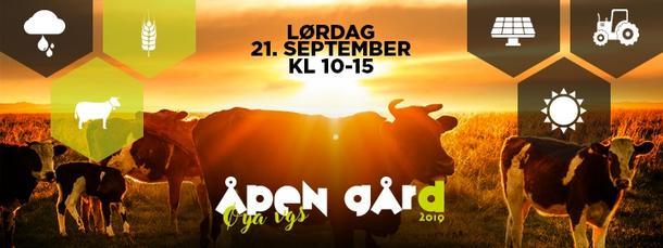 Plakat Åpen Gård ku i solnedgang