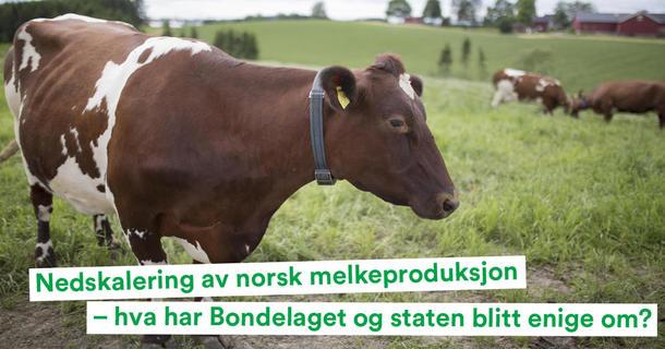 Landbrukspodden om nedskalering av melk