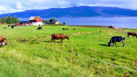 Gårdbruk i Troms