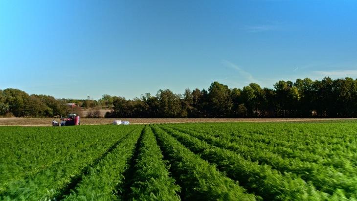 Det er mange utenlandske arbeidere i grønnsaksproduksjon.