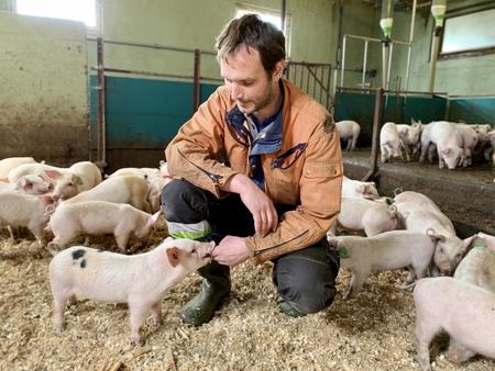 Dette er siste kullet med grisunger på Vestgarden Velo, og tida med svineproduksjon er snart over for Eivind Wårum og familien. Foto: Bjørn Bjørkli, Hadeland
