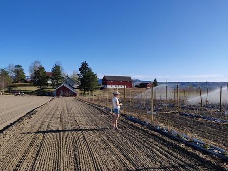 Ellen sørger for vanning og skuer utover nytt bringebærfelt.