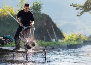 Nils Noraker i sitt rette element, som produsent av den berømte Noraker-rakfisken