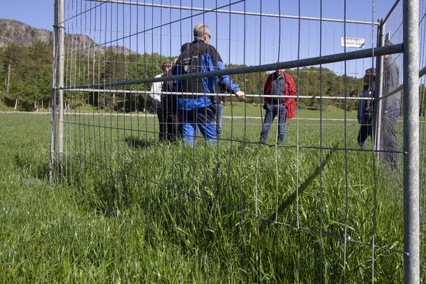 Inngjerdet området, hvor hjorten ikke kommer til, viser dobbelt så høyt gress. Juni 2020. Foto: Per-Anders Robertsen.