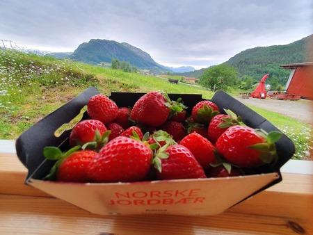 Jordbær - sommar på veg