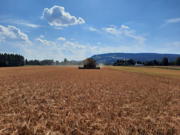 Svært gode innhøstingsforhold