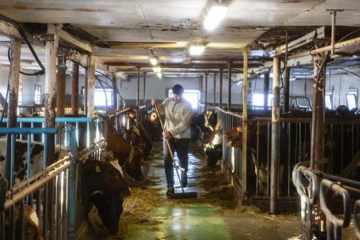 Bondelagsleder Lars Petter Bartnes har melkekyr, kylling, og korn. Foto: Inga Frøseth Rossing.