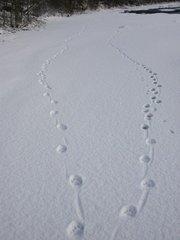 Bilde fra Statsforvalteren i Nordland