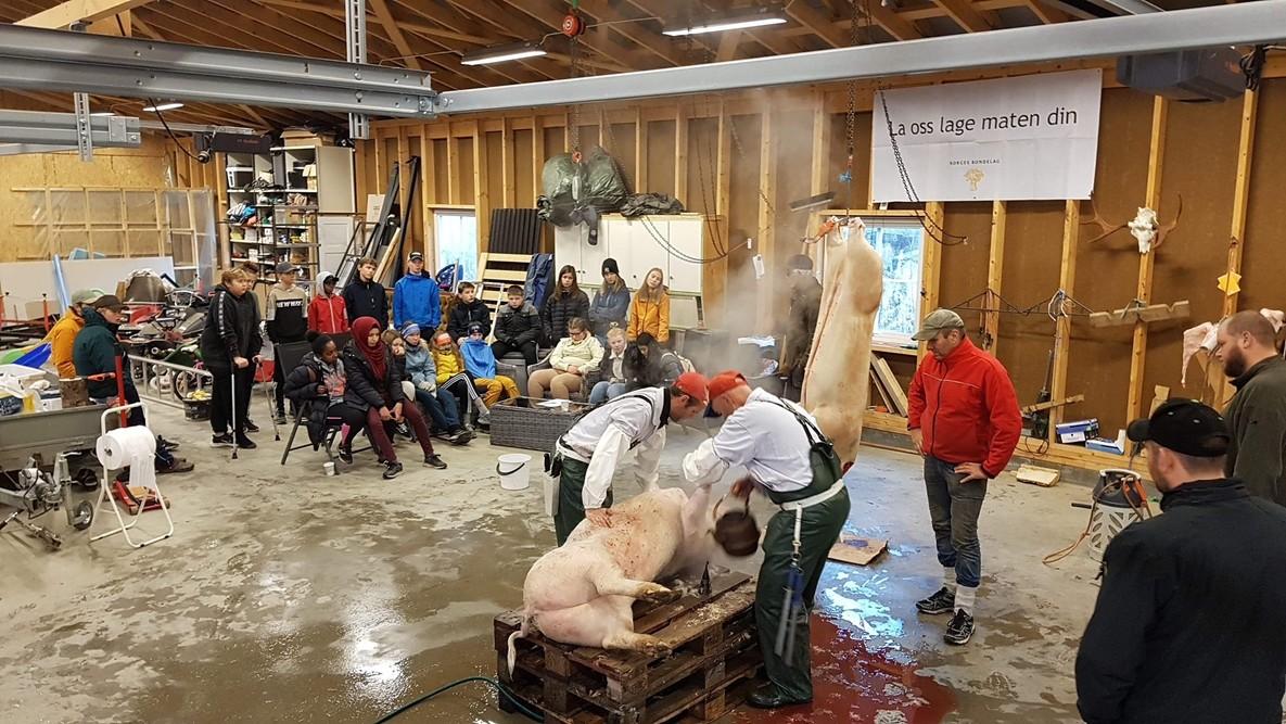 Griseslakting, en fin arena for læring om næring. Foto: Marte H Berg (vert og arrangør)